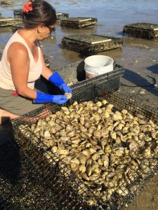 Sally the Oyster Farmer